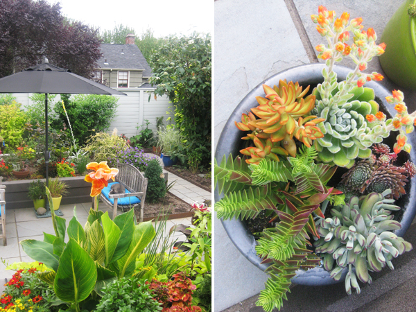 Raised Beds | Succulent Bowl